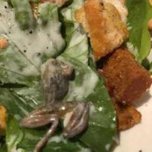 샐러드에 섞여 들어간 개구리
