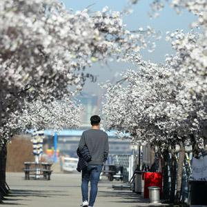 기다려지는 봄꽃
