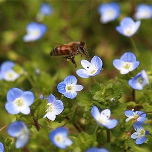 꽃향기에 취한 꿀벌
