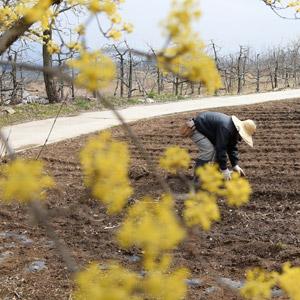 '봄날, 농부의 일상'