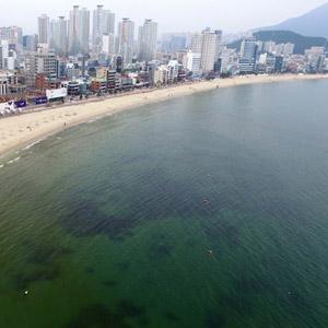 녹색 해수욕장