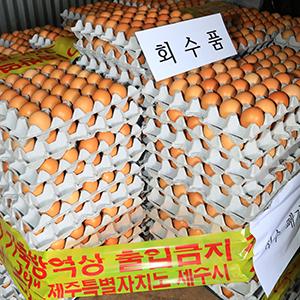 폐기 예정인 살충제 검출 계란
