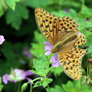 가을 나비의 지친 날개