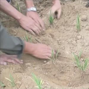 북한도 가뭄 '비상'…속 타는 북한 농심