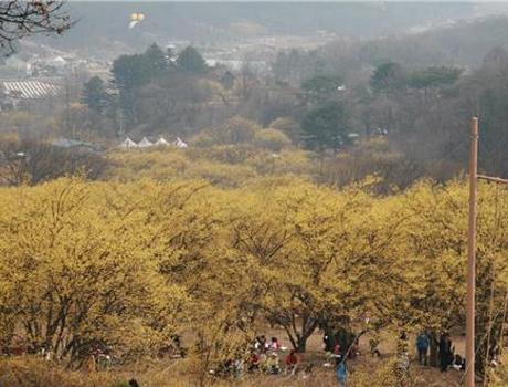 '봄, 꽃들이 부른다'…4월 곳곳에서 꽃축제 '활짝'