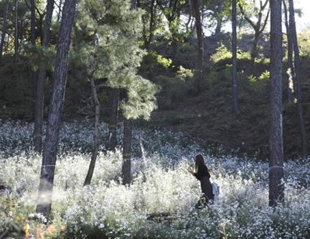 [길따라 멋따라] 깊어가는 가을 힐링 산책을…수도권 수목원 3선