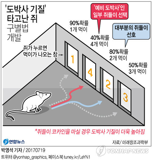 [그래픽] '도박사 기질' 타고난 쥐 구별법 개발