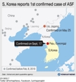 S.Korea reports first confirmed case of ASF