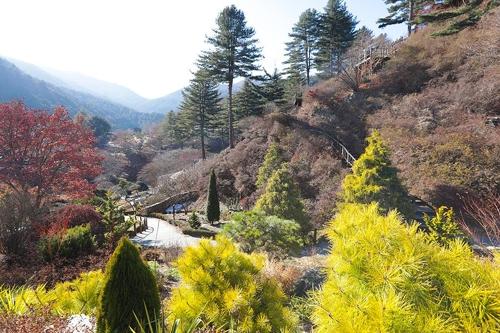 严寒中青翠挺拔的晨静树木园(韩联社记者成演在摄)