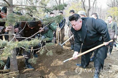 North Korean leader Kim Jong-un plants a tree during a visit to an air force unit to mark the nation's tree-planting day. (KCNA-Yonhap)