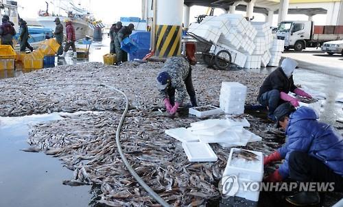 Chinese Boats U0026 39  Overfishing Dents Squid Haul In East Sea