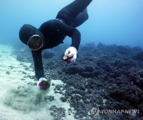 "In this undated file photo, a woman diver, or ""haenyeo,"" picks up seafood from the ocean floor. (Yonhap)"