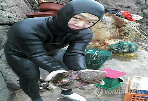Pictured on Jeju Island on July 9, 2014, is Chung So-young, 20, the youngest haenyeo. (Yonhap)