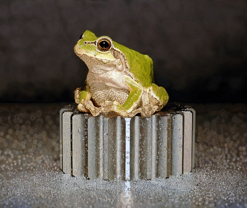 """This undated image provided by artist Kim Young-sung shows one of his paintings from his """"Nothing. Life. Object"""" series, featuring a frog. (Yonhap)"""