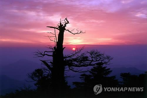 This file photo shows a view from Mount Taebaek at sunrise. (Yonhap)