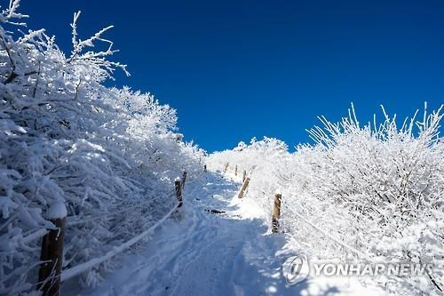 In this file photo, a trail of Mount Taebaek is covered in snow. (Yonhap)