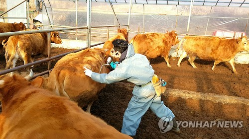 Lead s korea reports suspected outbreak of foot and mouth disease a livestock farm in south chungcheong province yonhap file photo publicscrutiny Gallery