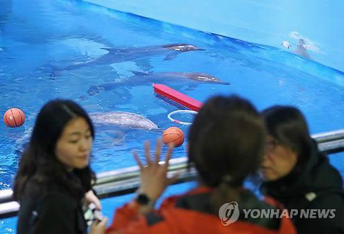 A joint investigation team of governmental officials and civic activists visits the Whale Life Experience Museum located in the southern port city of Ulsan in this photo taken on Feb. 22, 2017, after the death of a dolphin on Feb. 13. (Yonhap)