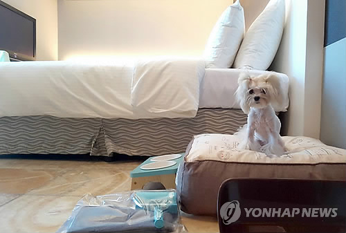 In this photo taken on Aug. 4, 2016, and provided by With Pet, a dog sits on a bed for pets offered by a local hotel in Busan. (Yonhap)
