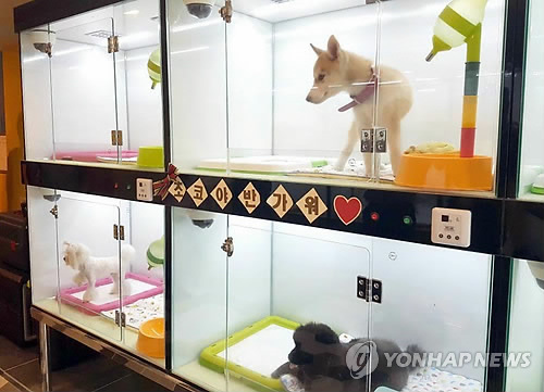 In this photo taken on Aug. 4, 2016, and provided by With Pet, dogs look out from their enclosures at a local pet hotel in Busan. (Yonhap)