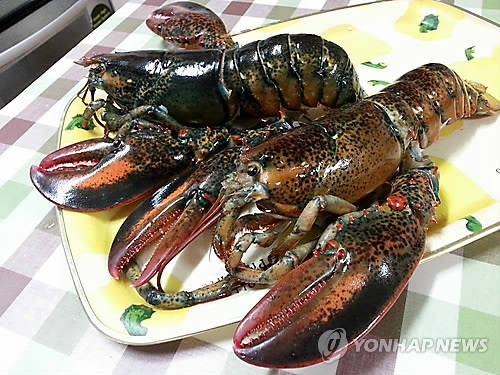 Lobster (Yonhap file photo)