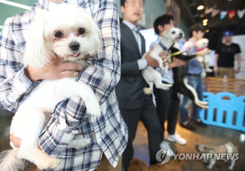 This undated file photo shows pet owners and their pets taking part in a festival about pets. (Yonhap)