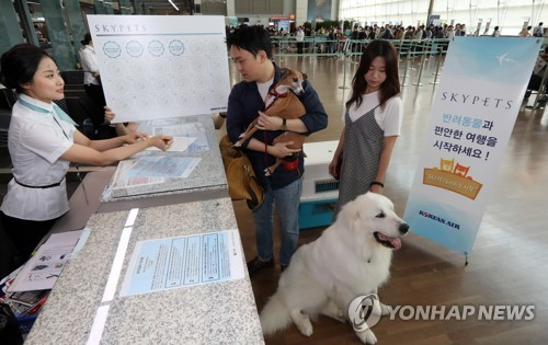 This undated file photo shows a man arriving with his pet dogs at a check-in counter in Incheon International Airport, west of Seoul. (Yonhap)