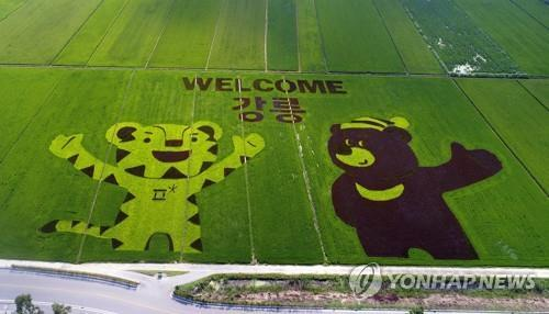 The mascots of the 2018 PyeongChang Winter Olympics -- Soohorang (L), a white tiger, and Bandabi, an Asiatic black bear -- are shown on a rice paddy in Gangneung, Gangwon Province, on Aug. 9, 2017. (Yonhap)