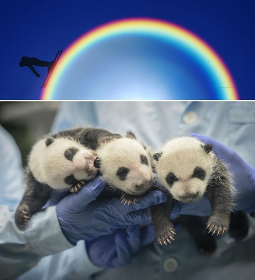 "This composite image shows Xinhua News Agency's news photos ""Skiing at 12th National Winter Games of China"" (top) and ""Panda Triplets in Guangzhou of China"" (bottom) (Yonhap)"