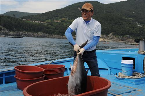 S. Korea to begins sales of farmed bluefin tuna