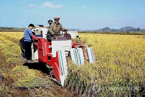 An undated file photo shows North Korean farmers harvesting rice. (Yonhap)