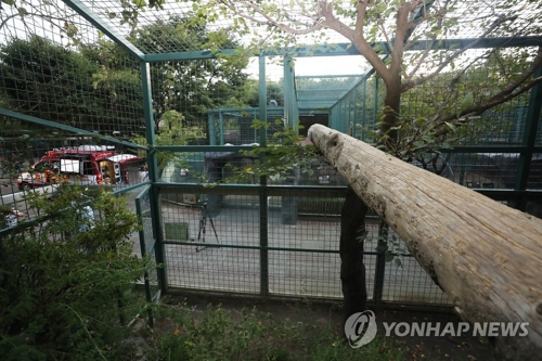 This photo shows the cage at the Daejeon O-World zoo from which a puma escaped on Sept. 18, 2018. (Yonhap)
