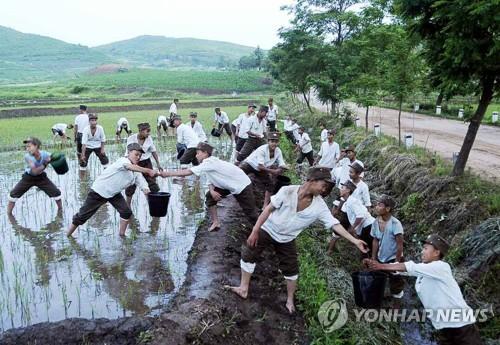 Des étudiants nord-coréens mobilisés pour combattre la sécheresse en juin dernier. (Photo d'archives Yonhap) (Utilisation en Corée du Sud uniquement et redistribution interdite)