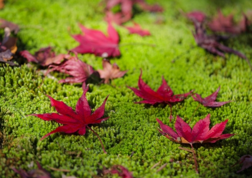 コケと落ち葉が美しいコントラストを作り出す=(聯合ニュース)