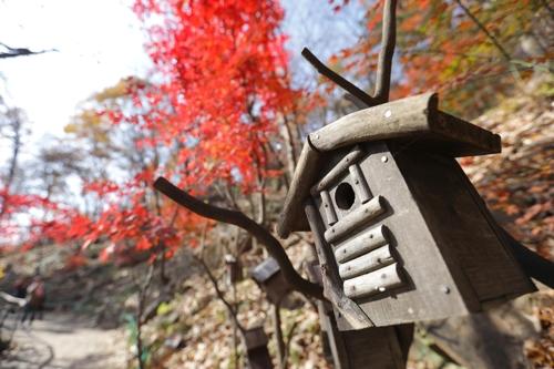 秋の風景が楽しめるトレッキングロード=(聯合ニュース)