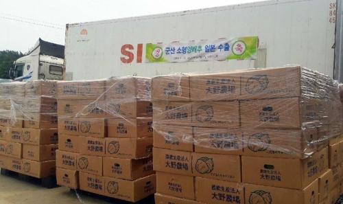 日本に輸出されるキャベツ(群山市提供)=(聯合ニュース)