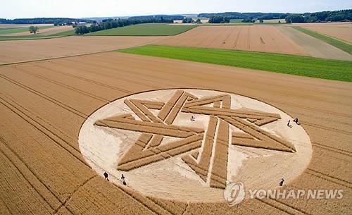 독일 밀밭에 초대형 미스터리 별 문양