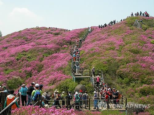 <황금연휴 N 여행> 호남권: 꽃·한지·다향·범선…셀수 없는 축제·행사 골라가요_1