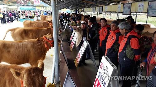 김영란법 시행 횡성한우 어떻게 살리나…30일 포럼 개최