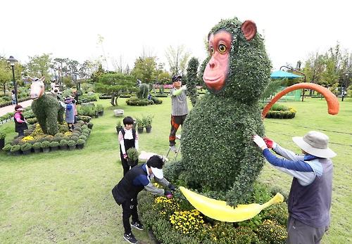 대전 유성에 국화꽃 만발…내달 전시회