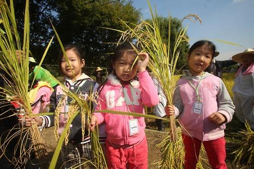 서울 강남구 양재천서 벼수확 체험해요