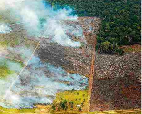 브라질 북부 파라 주(州) 아마존 열대우림에서 일어난 화재