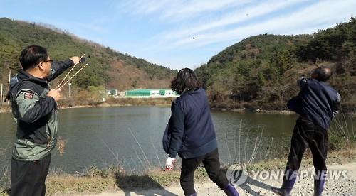 철새 AI 막으려고 새총·돌팔매 보초[연합뉴스 자료사진]