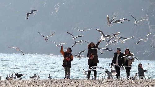 포근한 겨울 날씨에 바닷가로 나온 시민들[연합뉴스 자료사진]