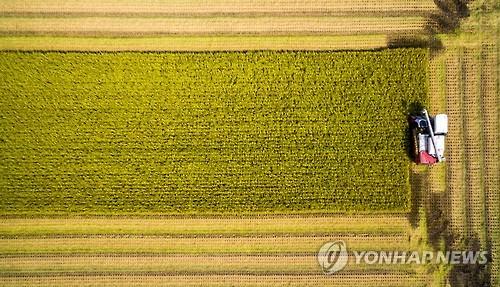 벼 수확 [연합뉴스 자료사진]