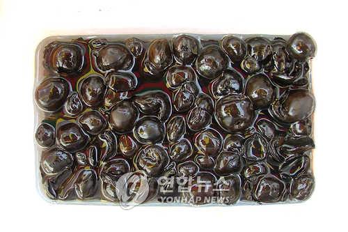 패총에서 나온 신석기시대 식량 도토리[연합뉴스 자료사진]