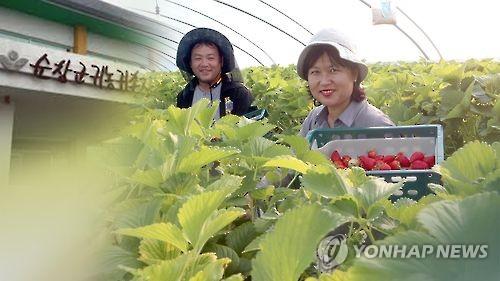 농촌에 성공적으로 안착한 귀농인 [연합뉴스 자료사진]