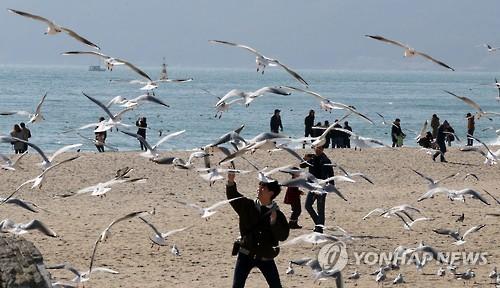 해운대의 겨울