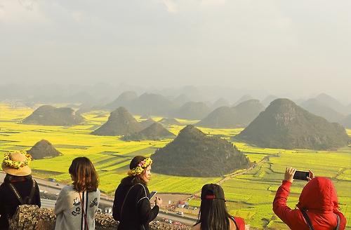 해마다 이맘때면 쿤밍 루오핑 금계봉에는 유채가 바다를 이룬다(성연재 기자)