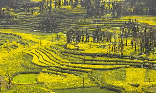 오랜시간 지형의 변화로 다랭이논 같은 형태의 유채밭이 형성됐다(성연재 기자)